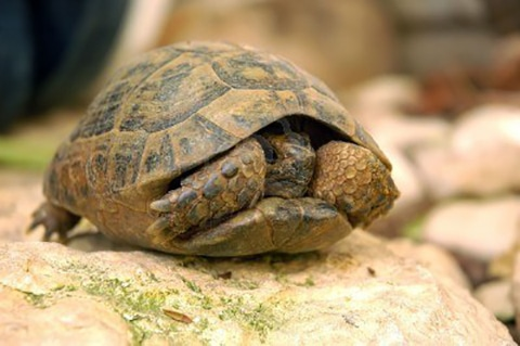 Turtling vs Aging